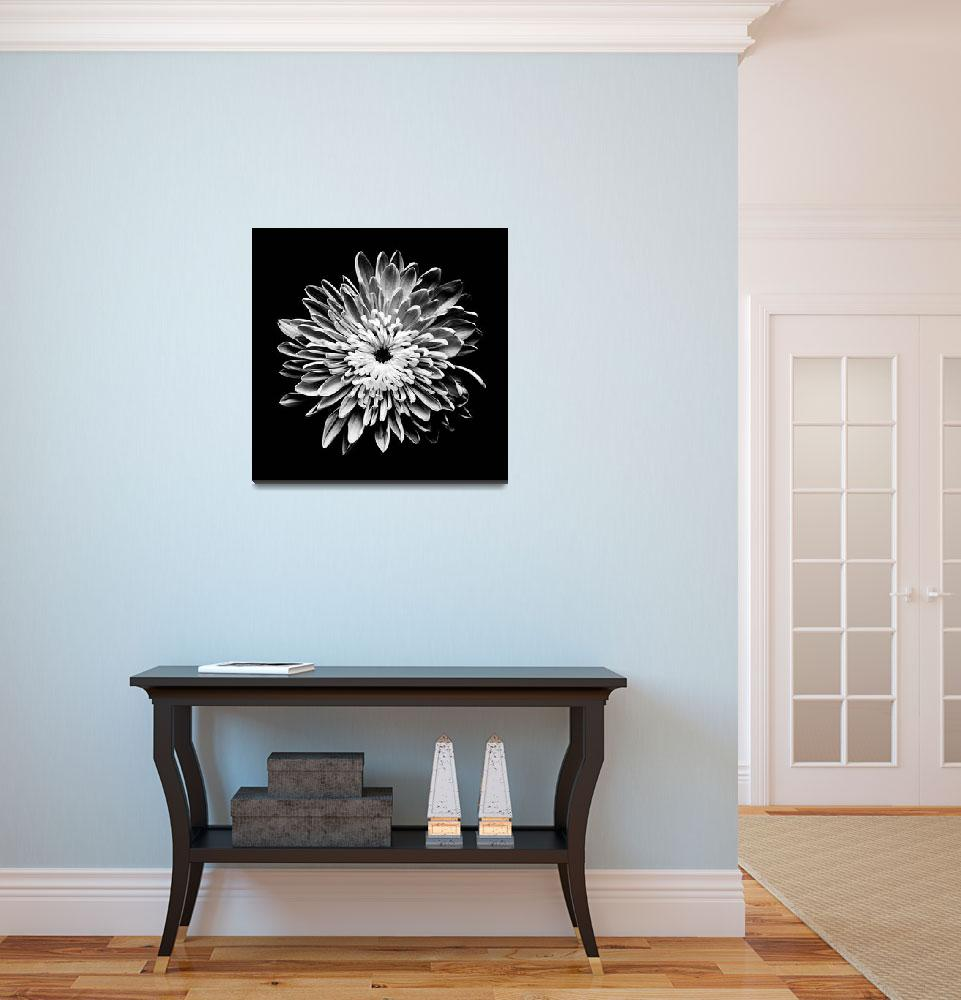 """Chrysanthemum - b&w large&quot  (2008) by caslad"