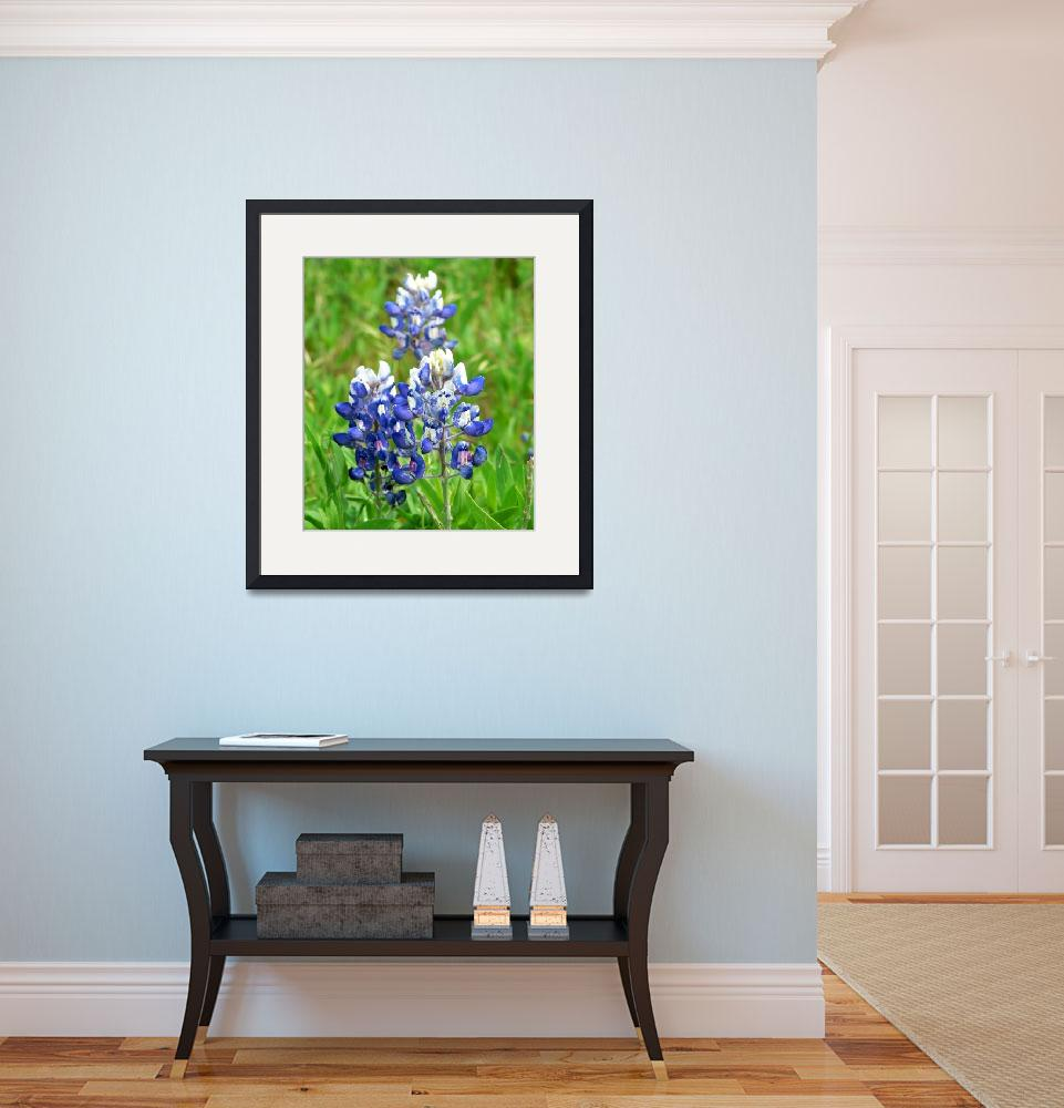 """""""Texas Bluebonnet Wildflowers1100067&quot  (2010) by rayjacque"""
