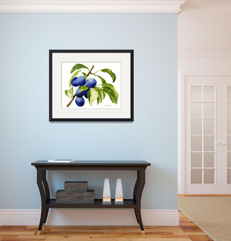 """Damson Plums (white background)&quot  (2014) by Pacific-NW-Watercolors"