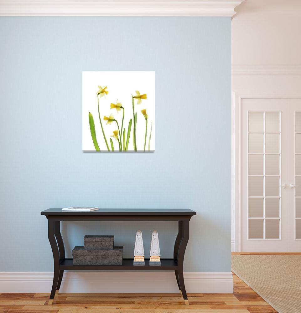 """""""Daffodil Garden&quot  (2008) by judystalus"""