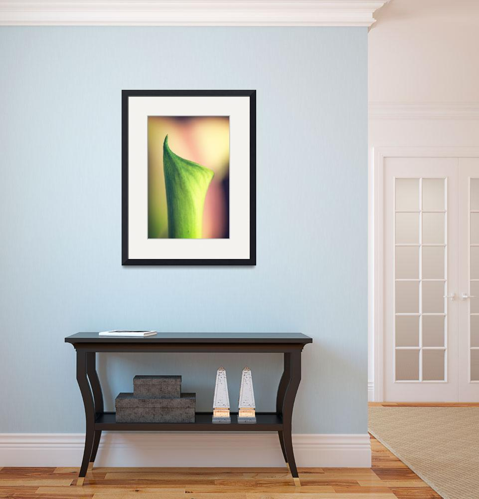 """""""Bud of a Calla Lily""""  by laurajstudio"""