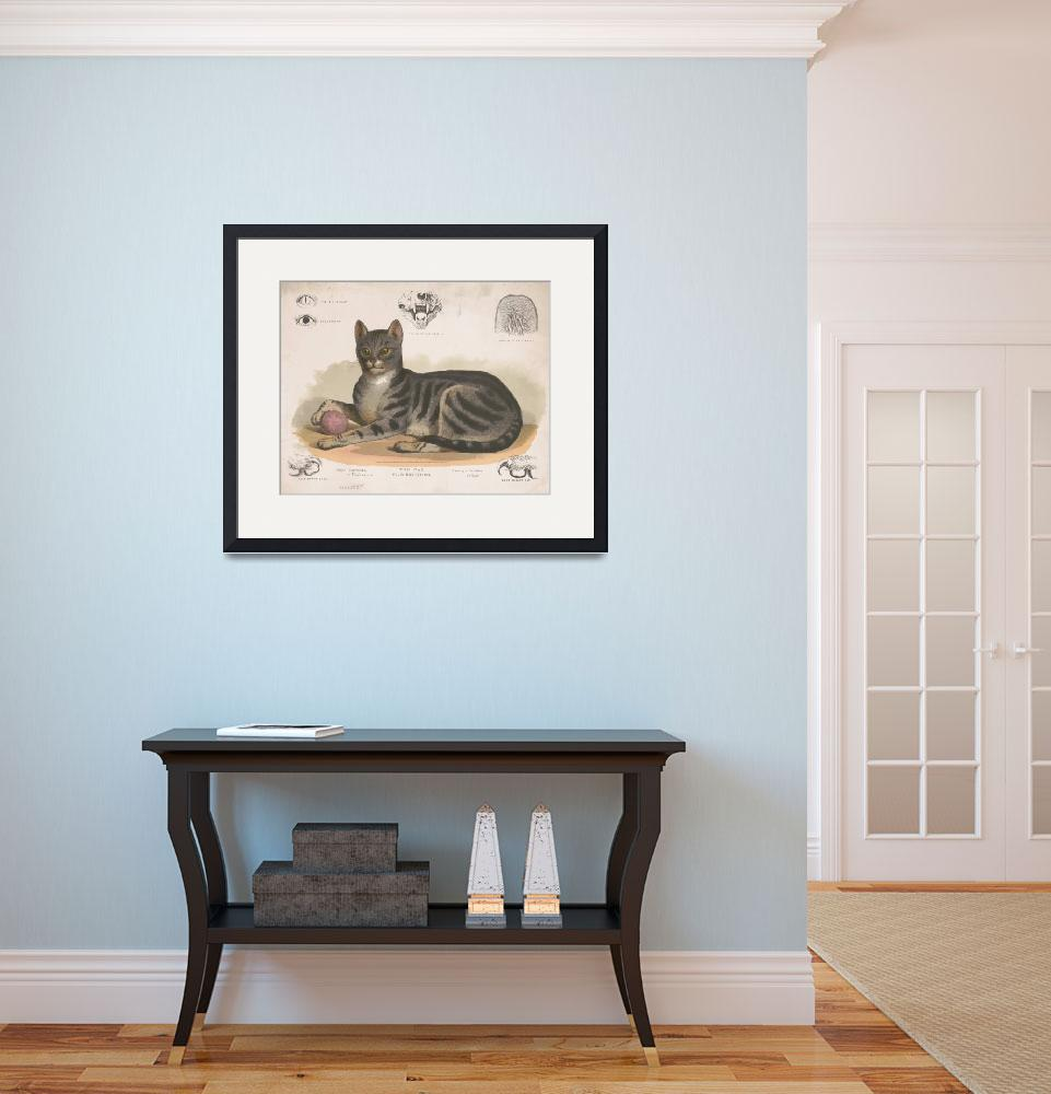 """Vintage Illustration of a Domestic Cat (1872)&quot  by Alleycatshirts"