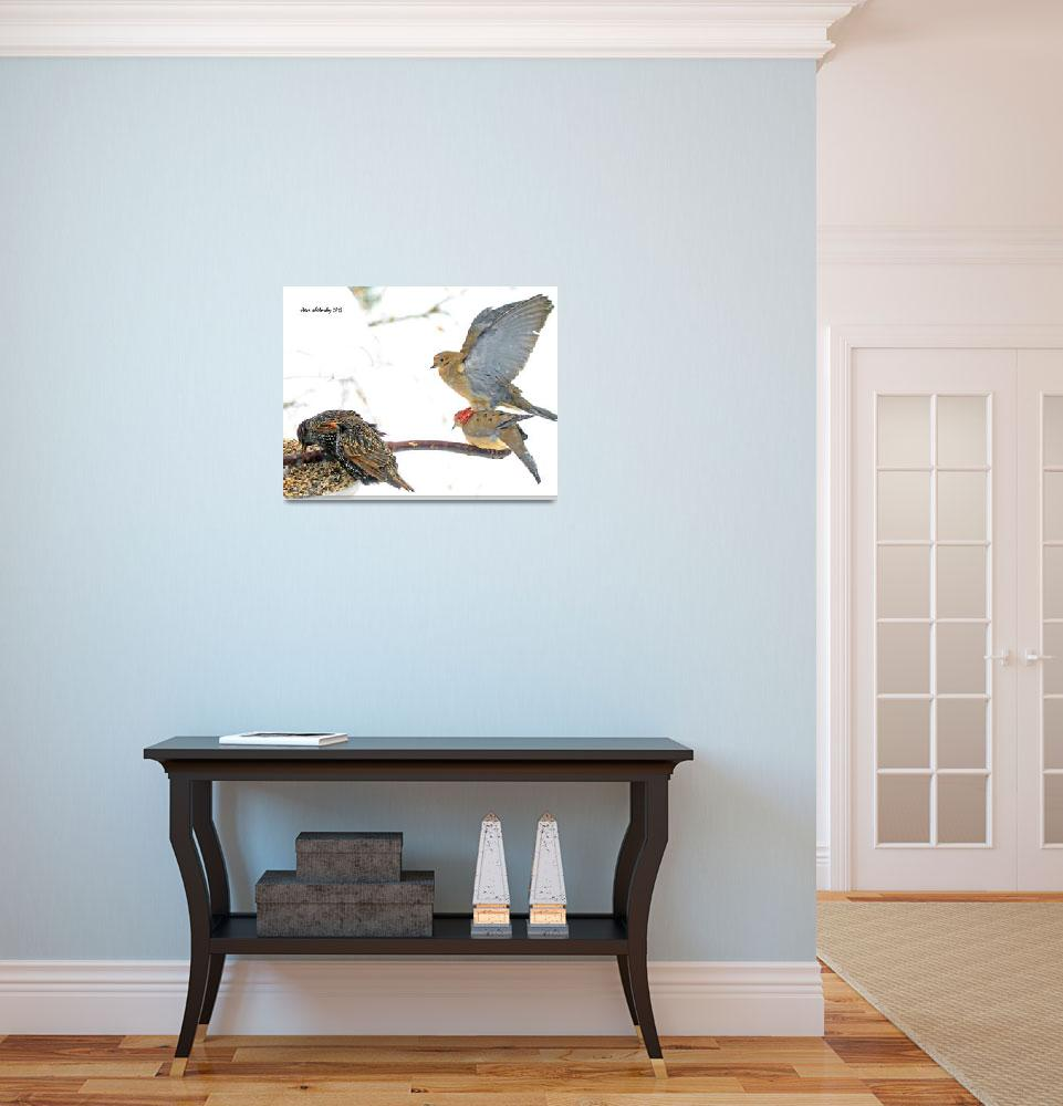"""Hungry Dove""  (2015) by shelshots"