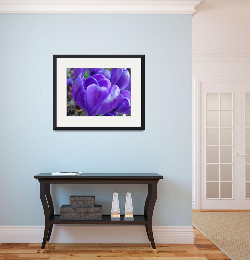 """Purple Crocus Flower Art Prints Spring Garden&quot  (2014) by BasleeTroutman"