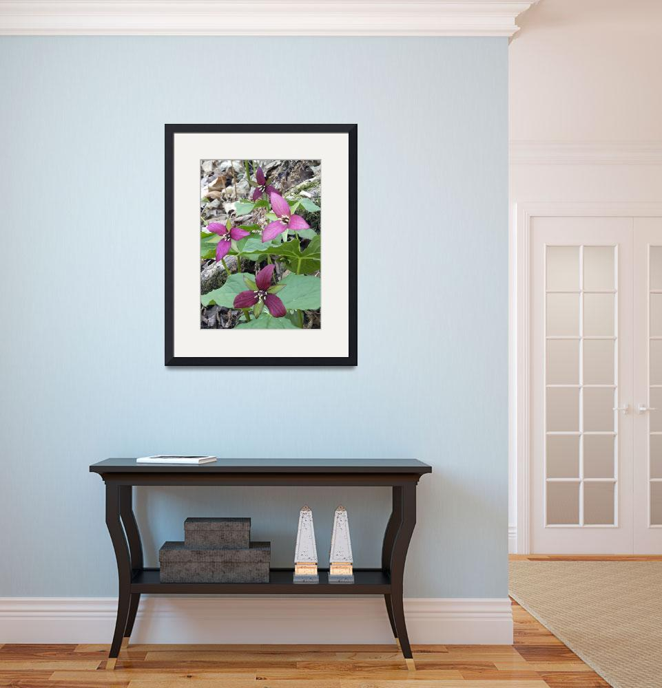 """Purple Trillium Group&quot  (2009) by MichaelStephenWills"