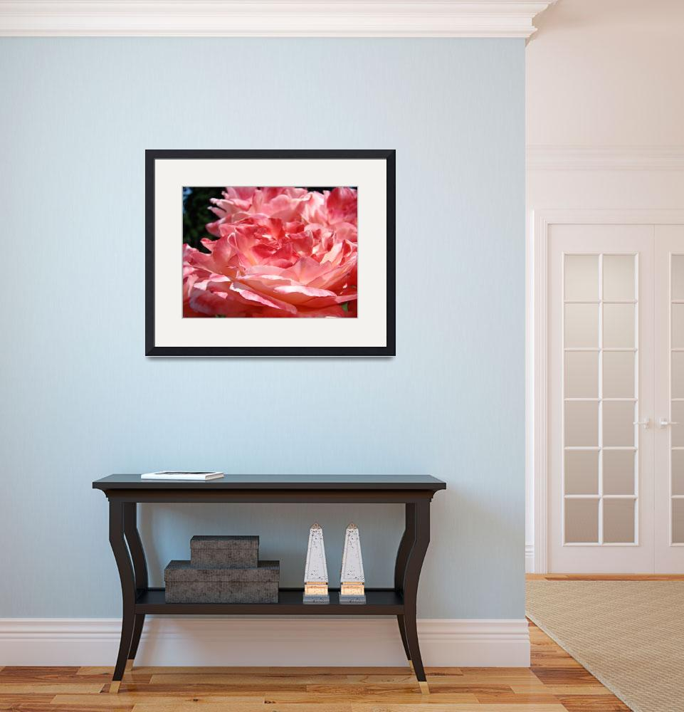 """""""Rose Flowers Pink Roses 3 Rose Garden Giclee Art&quot  (2009) by BasleeTroutman"""