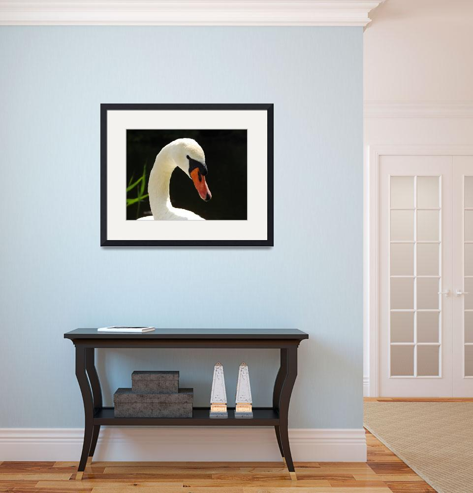 """""""white beauty""""  (2013) by gallerymay"""