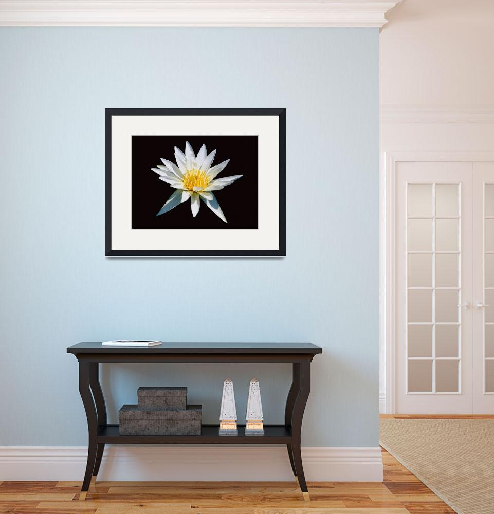 """""""Elegant White Water Lily""""  (2010) by George_Oze"""