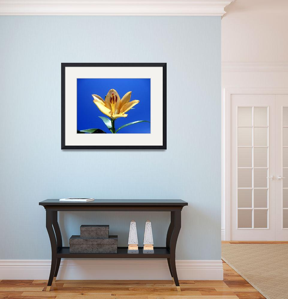 """""""Yellow LIly&quot  (2012) by johnscanvassprints"""