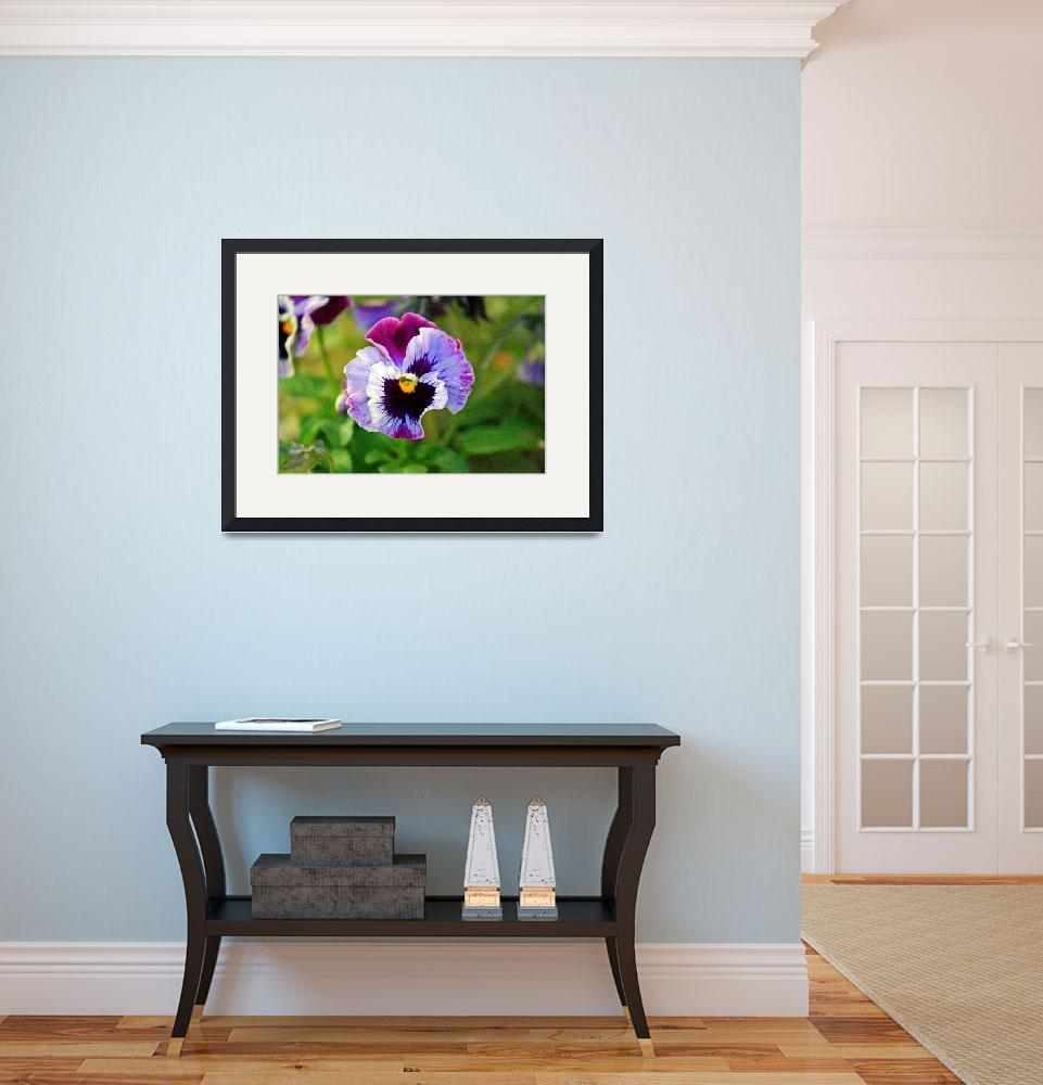 """""""Pansy Flower Close-up&quot  (2012) by KsWorldArt"""