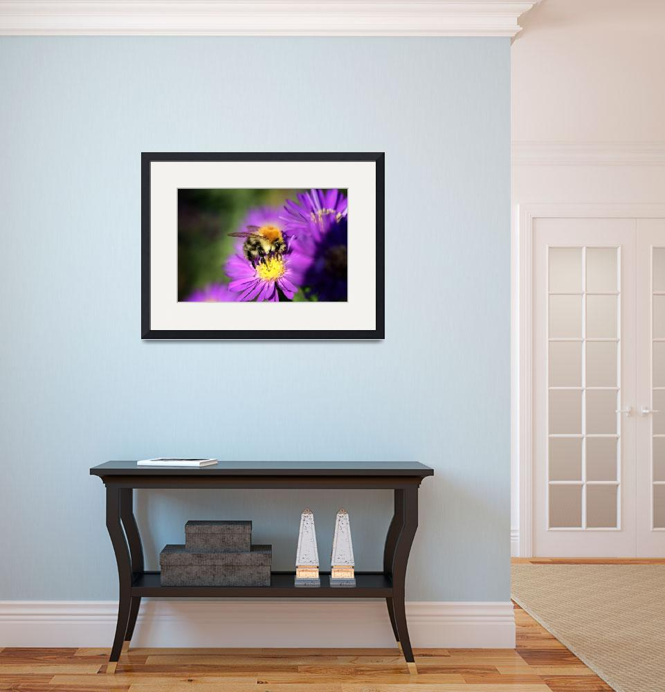 """Purple flower and bumblebee&quot  (2006) by JohnEmmaneel"