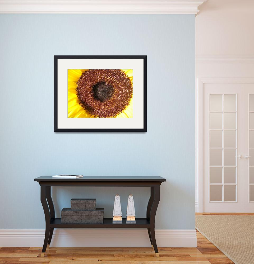 """""""center of a sunflower&quot  (2010) by LauriesCreations"""