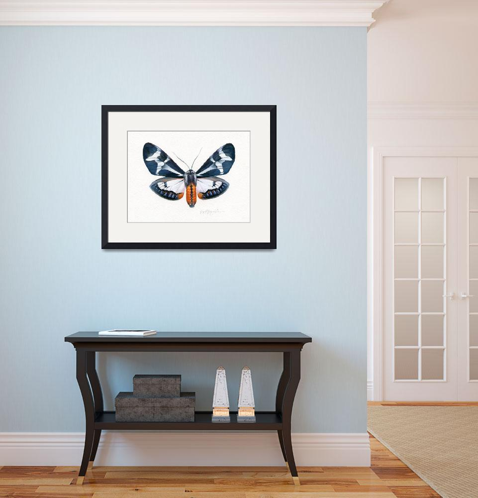 """""""Dysschema Howardii Moth Male&quot  (2009) by LisaMclaughlin"""