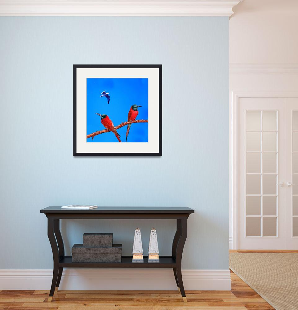 """""""Red African Bee Eaters&quot  (2006) by frankreggio"""
