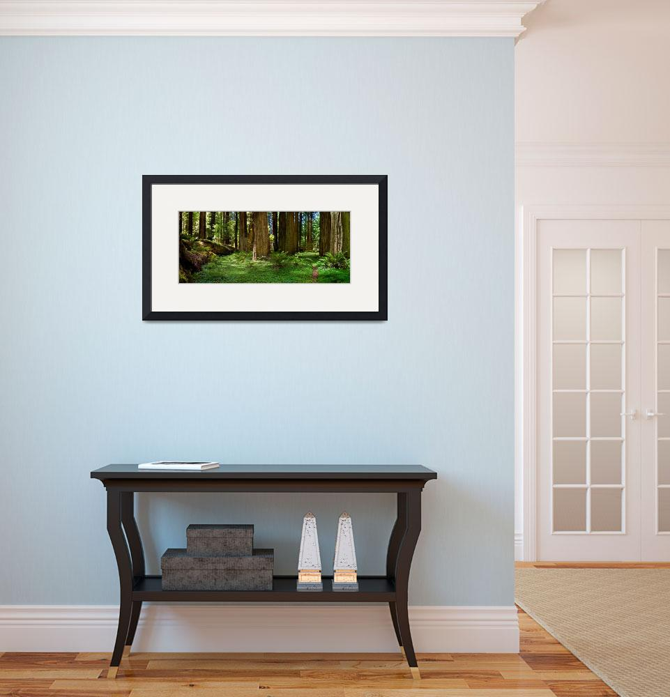 """""""Redwood Forest Panorama&quot  (2008) by pbk"""