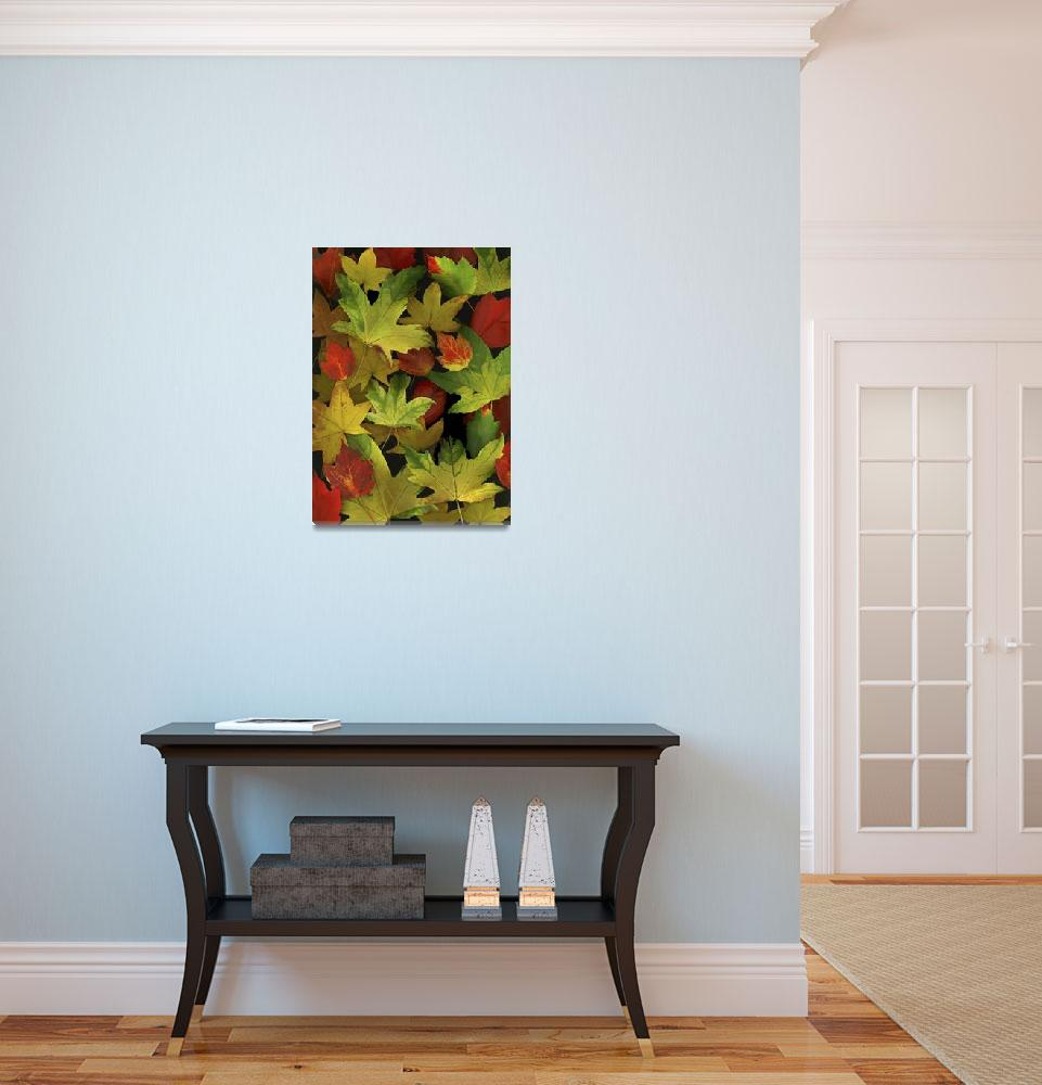 """""""Colorful Autumn Leaves&quot  by DesignPics"""
