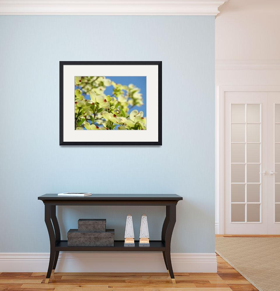 """Dogwood Flowers White Dogwood Tree 18 Blue Sky Art&quot  (2009) by BasleeTroutman"