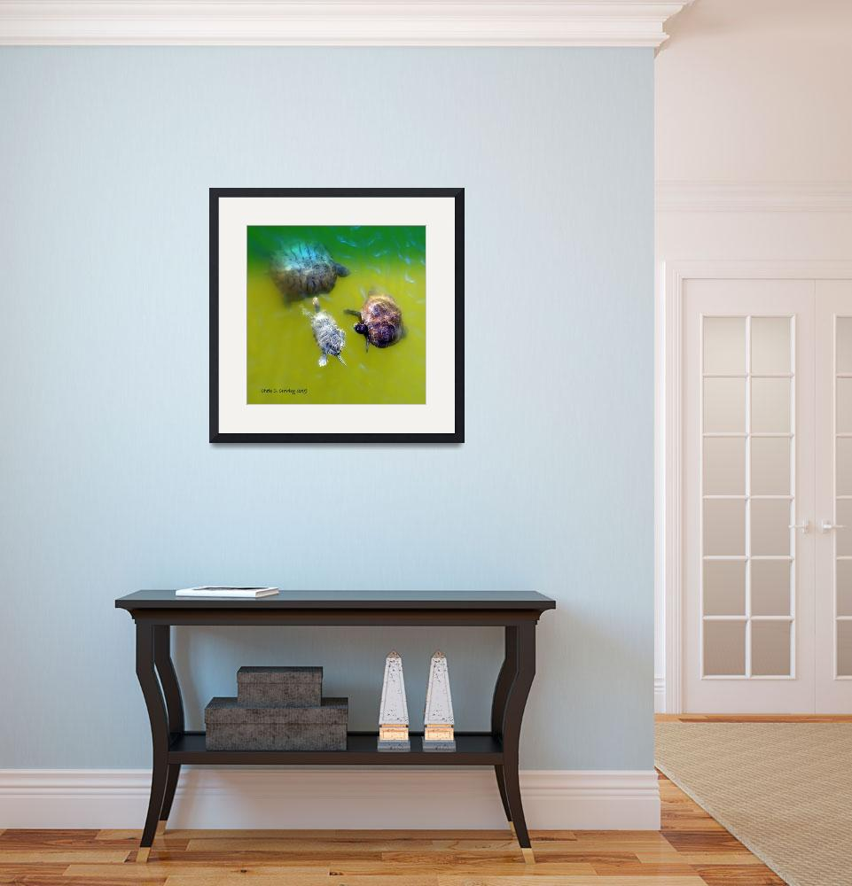 """""""Turtle Trio&quot  (2009) by ChrisCrowley"""