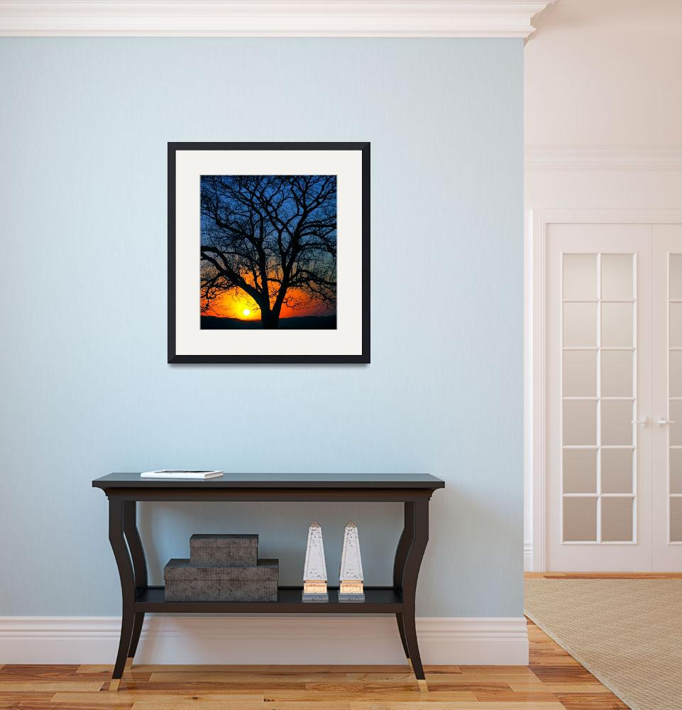 """""""another sunset, another tree&quot  (2005) by joaobambu"""
