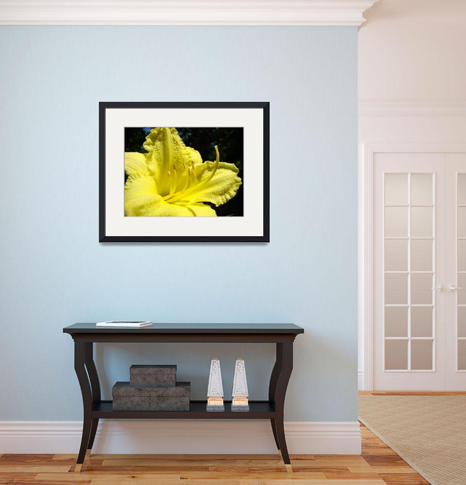 """Yellow Lily Flower art Fine Art Photography&quot  (2010) by BasleeTroutman"