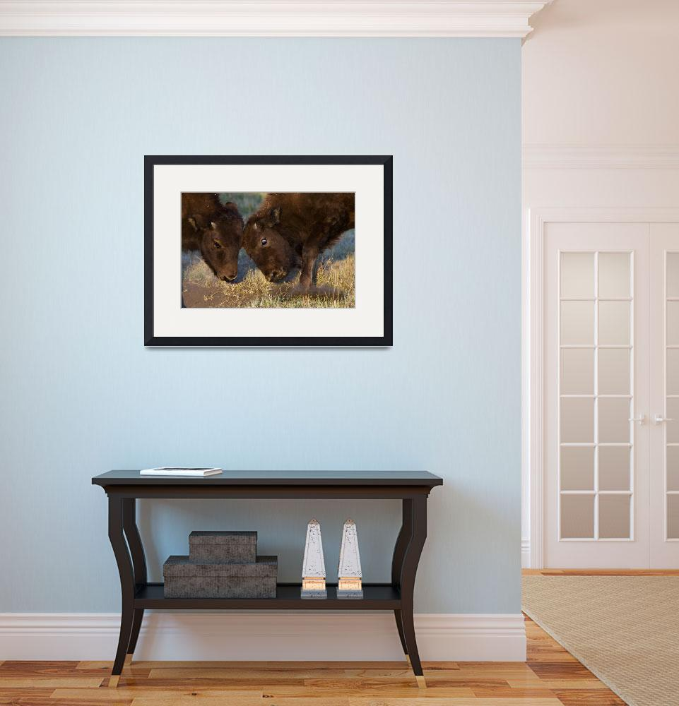 """""""Bison Babies&quot  by WorldDesign"""