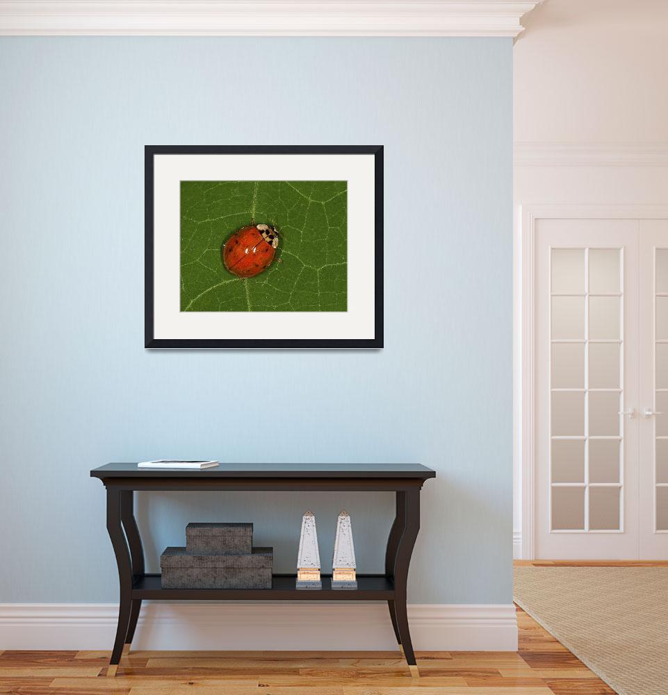 """Lady Bug  #147&quot  by MatthewLermanPhotography"
