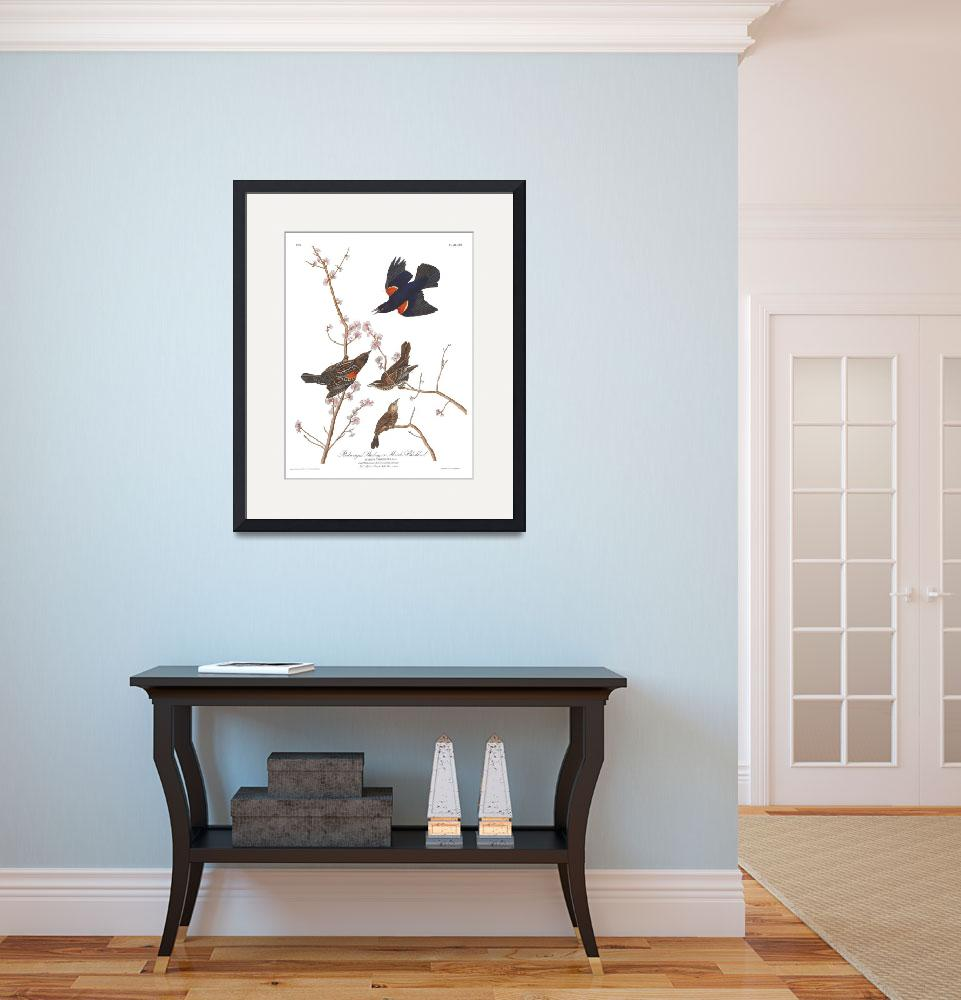 """Audubon Red Winged Starling,  Plate 67"" by FineArtClassics"