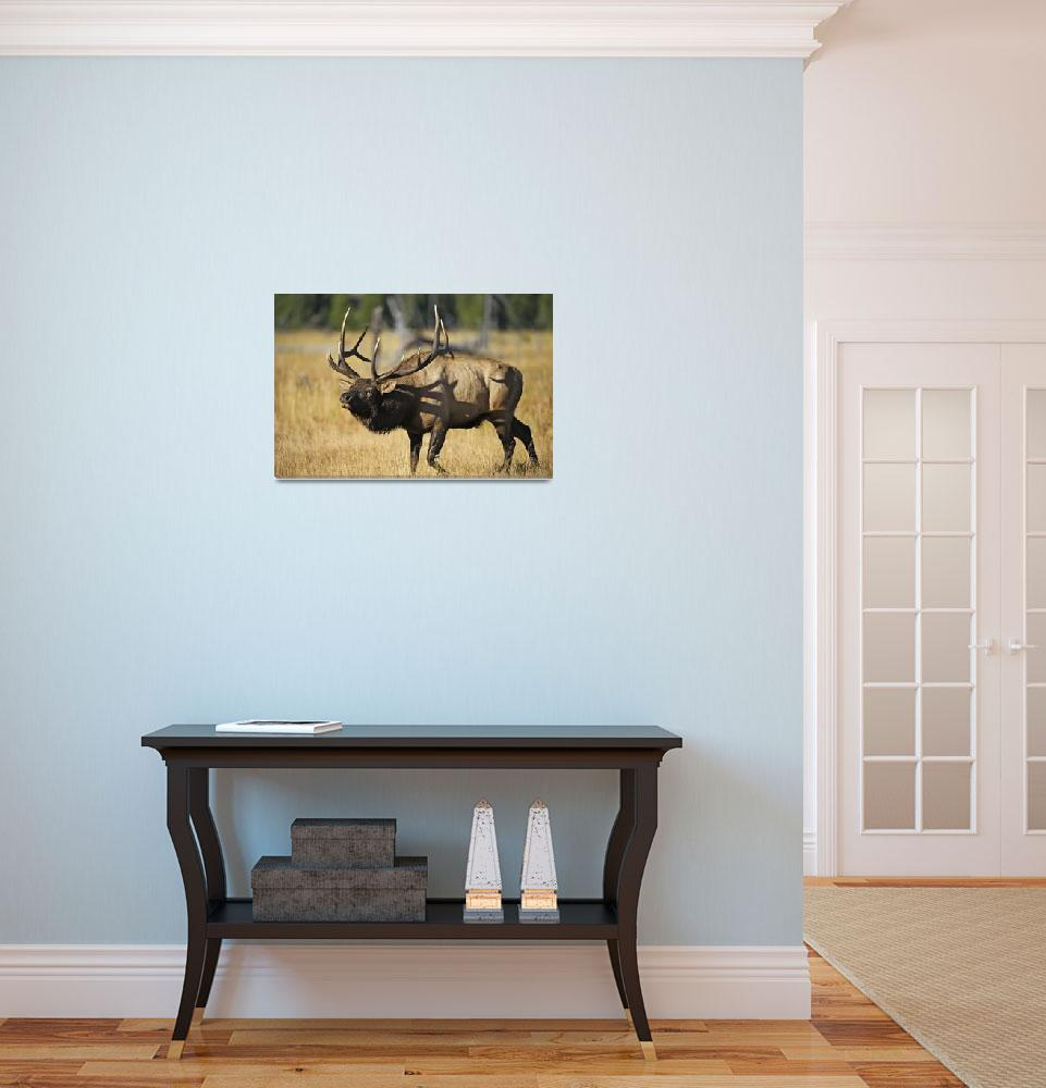 """Rocky Mountain Bull Elk Herding""  (2014) by GLL"