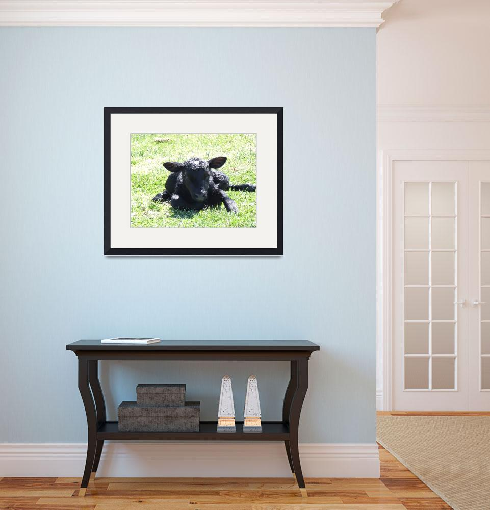 """""""New born calf&quot  (2009) by Hartphotography"""