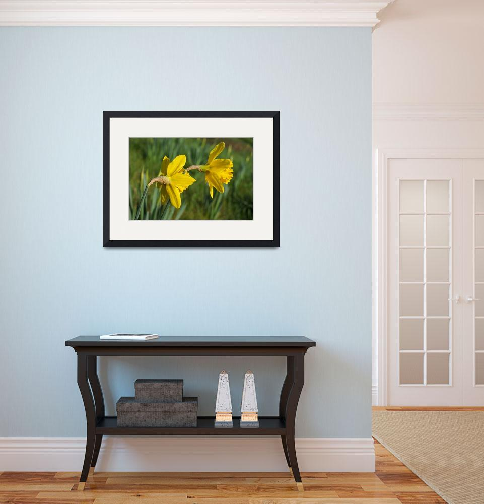 """Daffodils Springtime Green Meadow Field&quot  (2014) by BasleeTroutman"