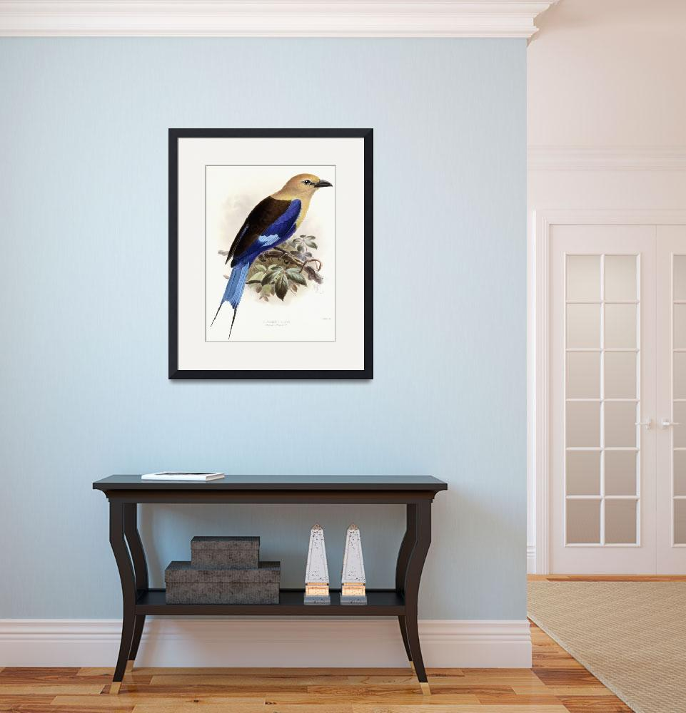 """Bluebellied Roller, 1893 (hand-coloured lithograph&quot  by fineartmasters"
