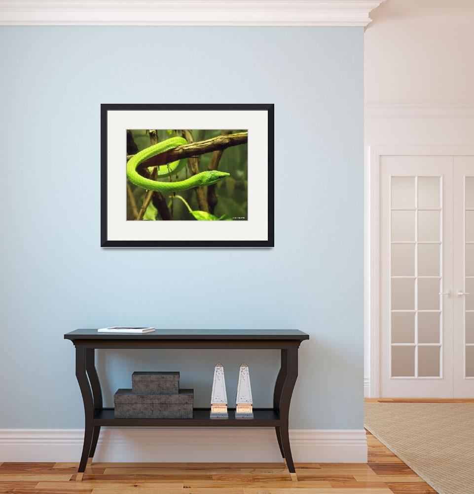 """""""Green Vine Snake&quot  (2009) by redhawk45"""