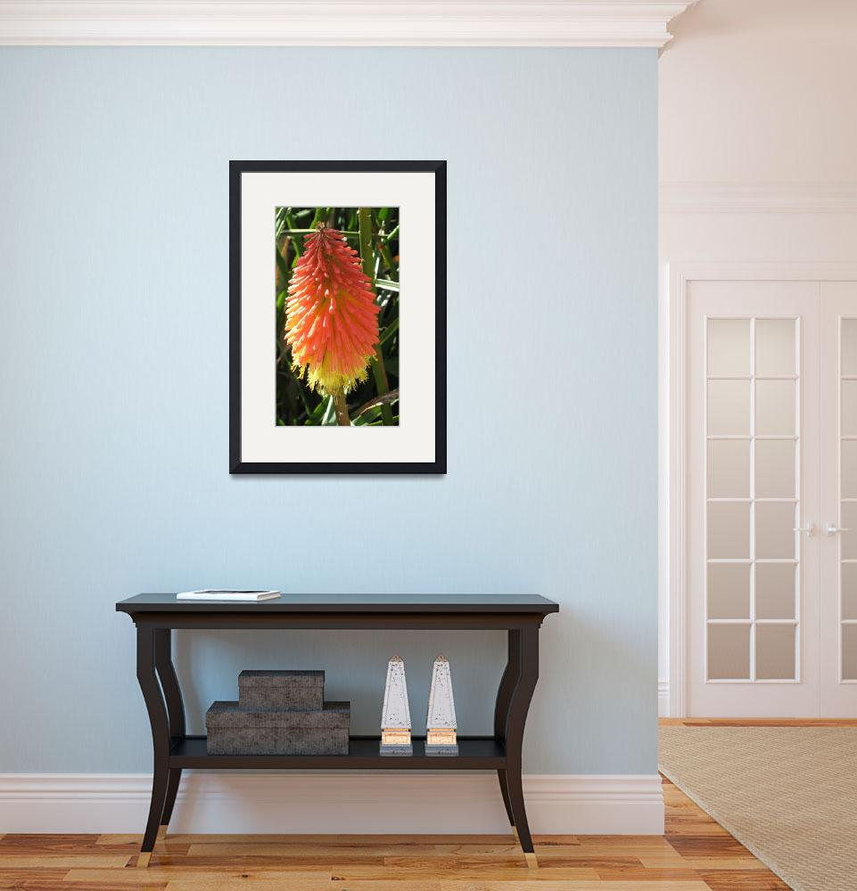 """""""Red Hot Poker Plant&quot  (2008) by boysen"""
