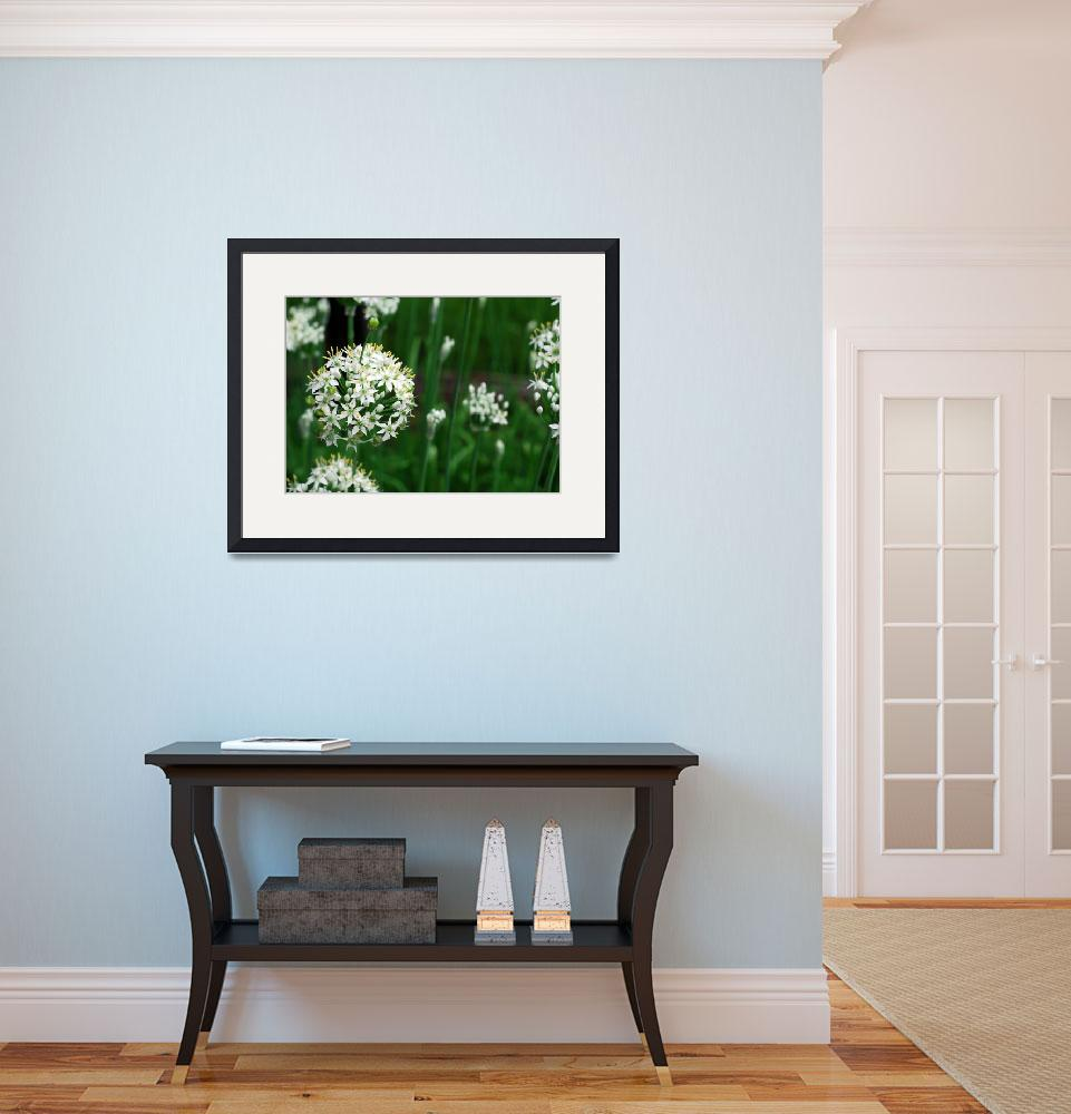 """""""white flower&quot  by photographybyccr"""