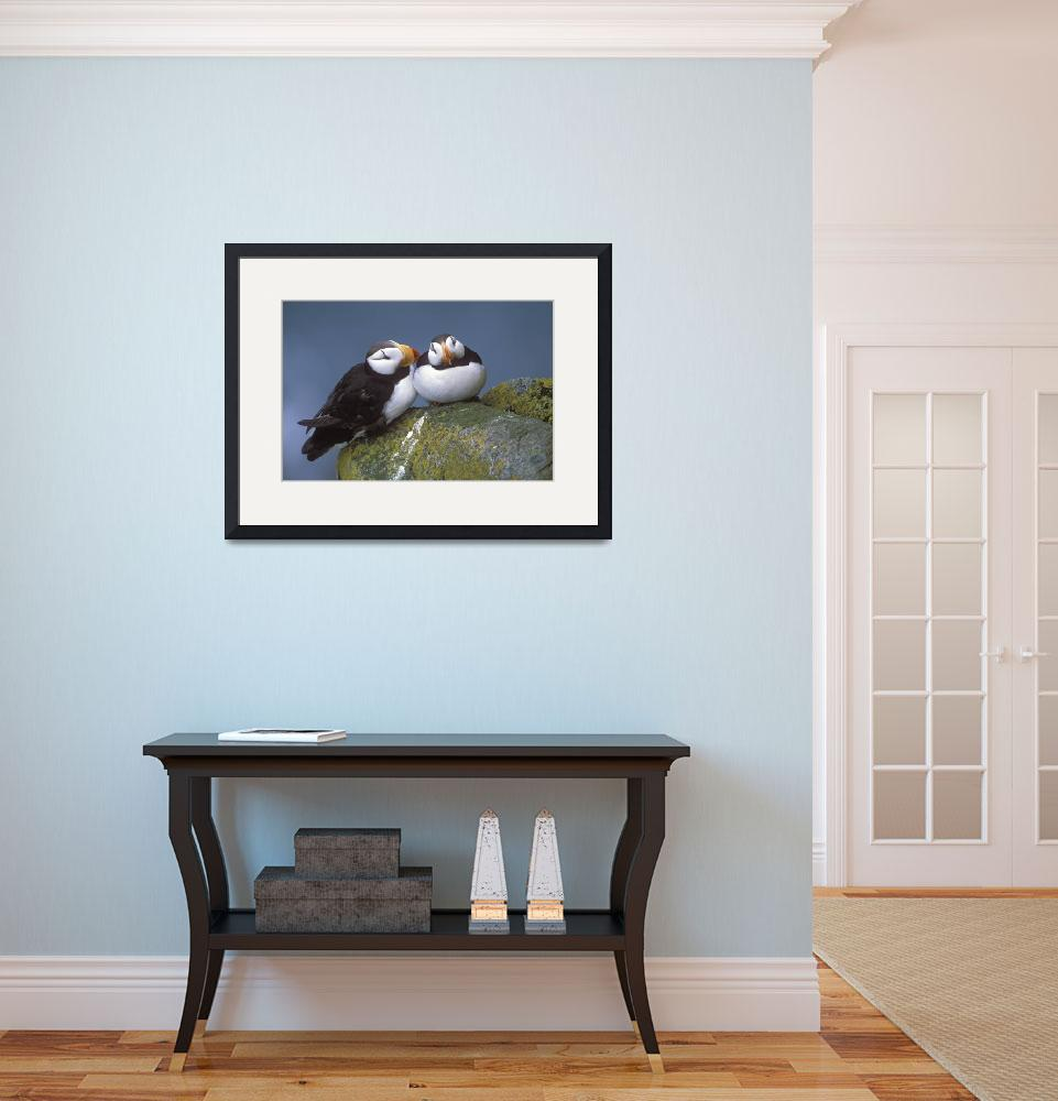 """""""Horned Puffin pair perched on ledge Round Island&quot  by DesignPics"""