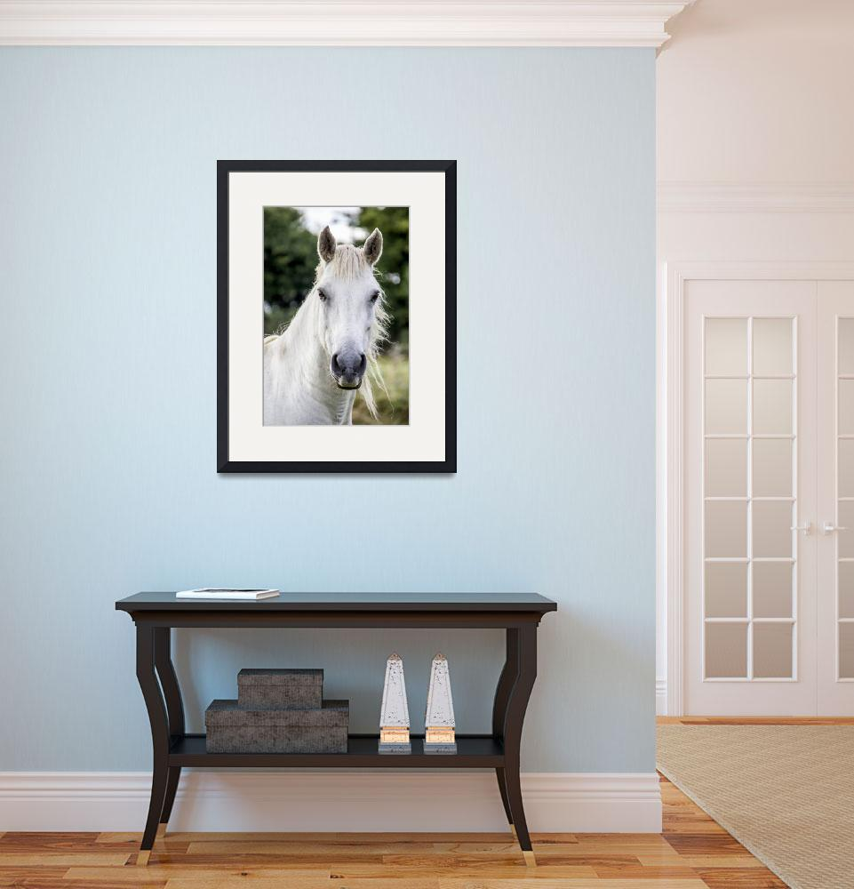 """""""White Horse Art Print&quot  (2016) by rogueart"""