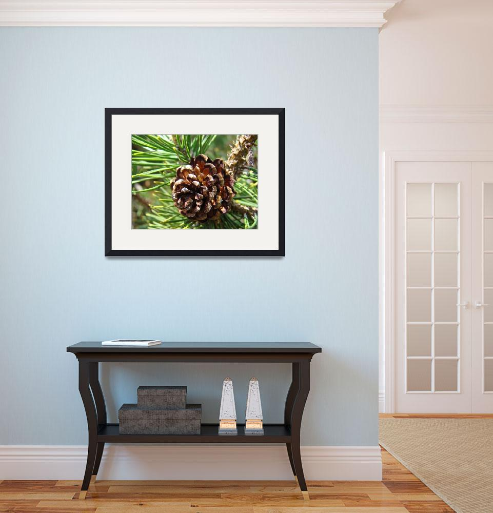 """""""Pine Cone Fine Art Phtography Conifer Trees&quot  (2010) by BasleeTroutman"""