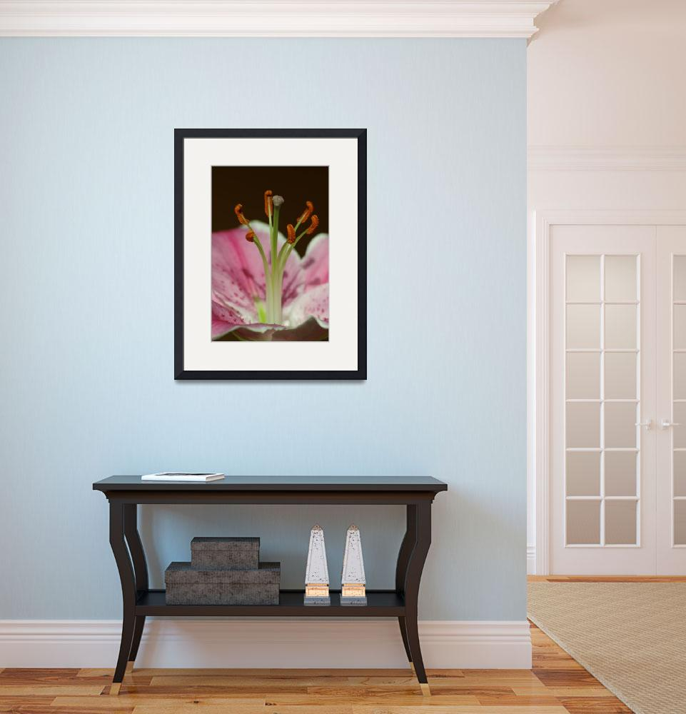 """""""Lily Pistil and Stamina&quot  (2008) by kaydadesigns"""