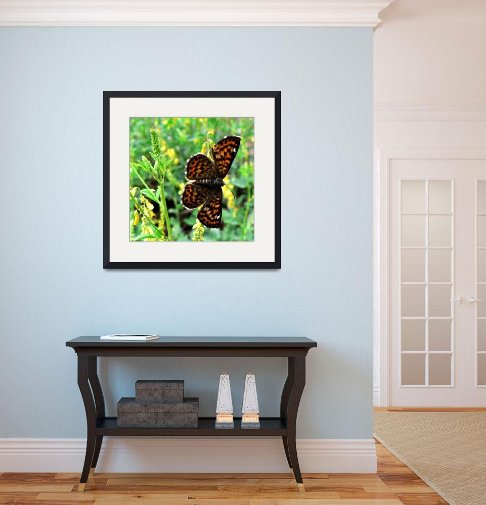 """""""Butterfly Square&quot  by rayjacque"""