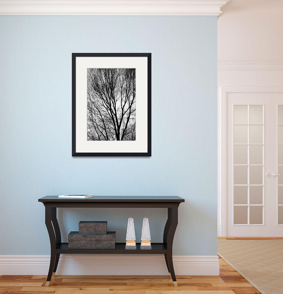 """""""Black and White Tree Branches Silhouette&quot  (2011) by lightningman"""