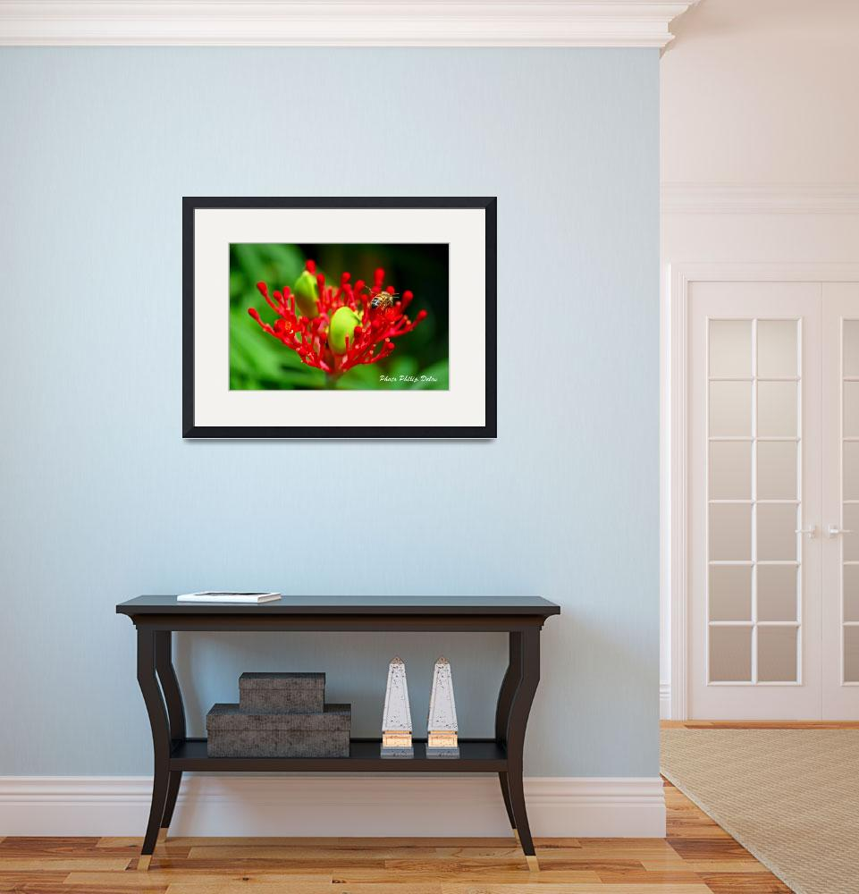 """""""RED FLOWER BEE IN GUADELOUPE&quot  (2008) by PhilipDelos"""