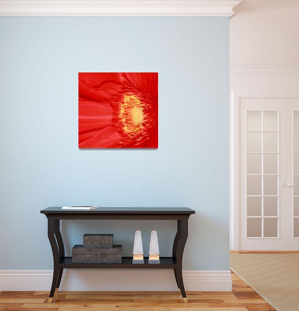 """Red Gerbera Daisy""  (2009) by rayjacque"