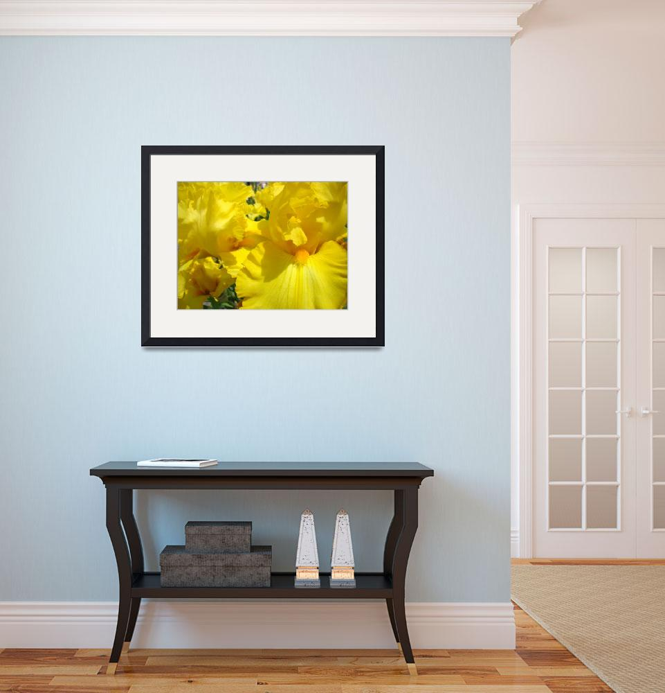 """Irises Yellow Iris Flower 14 Spring Flowers Art&quot  (2009) by BasleeTroutman"