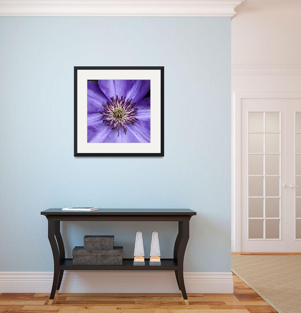 """""""Clematis Radiance&quot  by leinesdesign"""