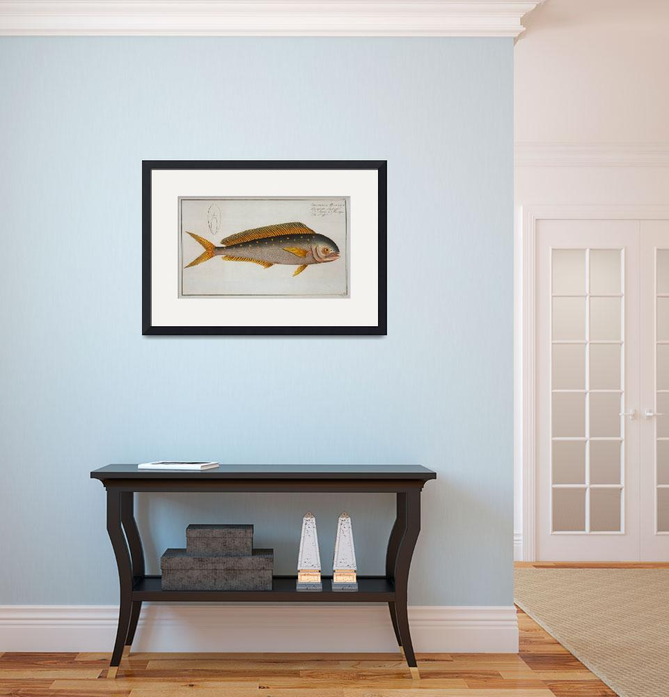 """""""Vintage Dolphinfish Illustration (1785)&quot  by Alleycatshirts"""