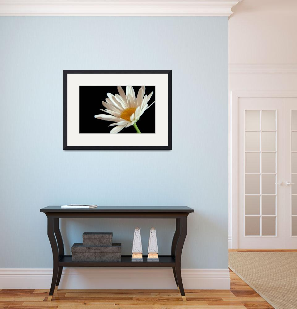 """Flower 02b White Spring Daisy""  (2010) by Ricardos"