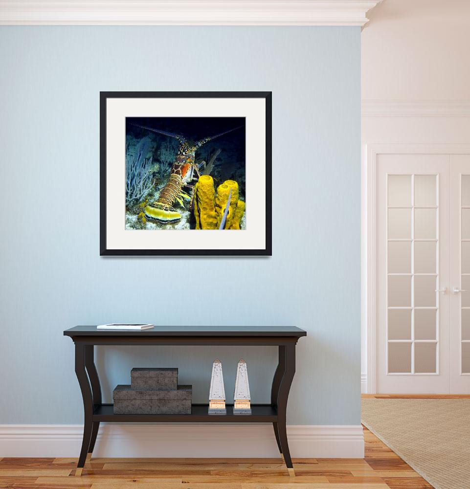 """""""Caribbean Reef Lobster at Night&quot  (2012) by scubagirlamy"""
