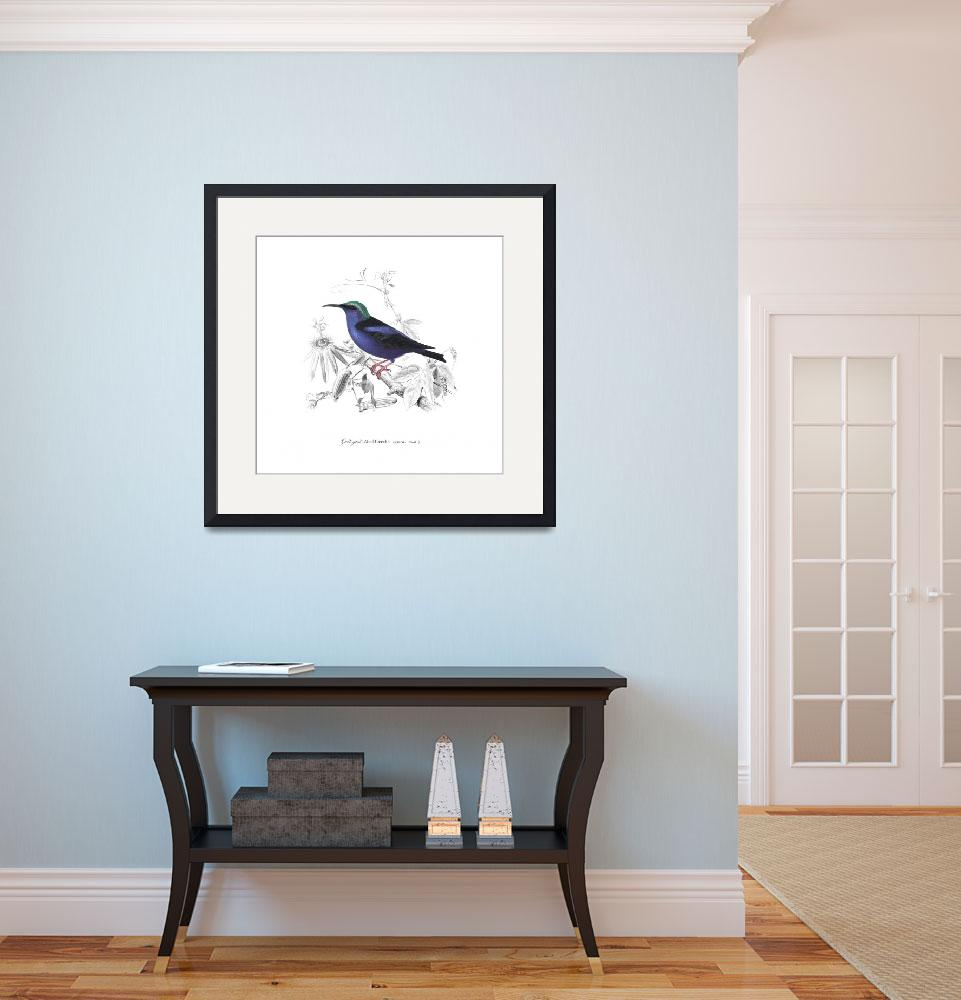 """Red-Legged Honeycreeper (1849)""  by CoachwhipBooks"
