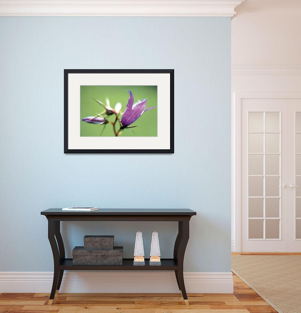 """""""Large Bell Flower (Campanula latifolia) (photo)&quot  by fineartmasters"""