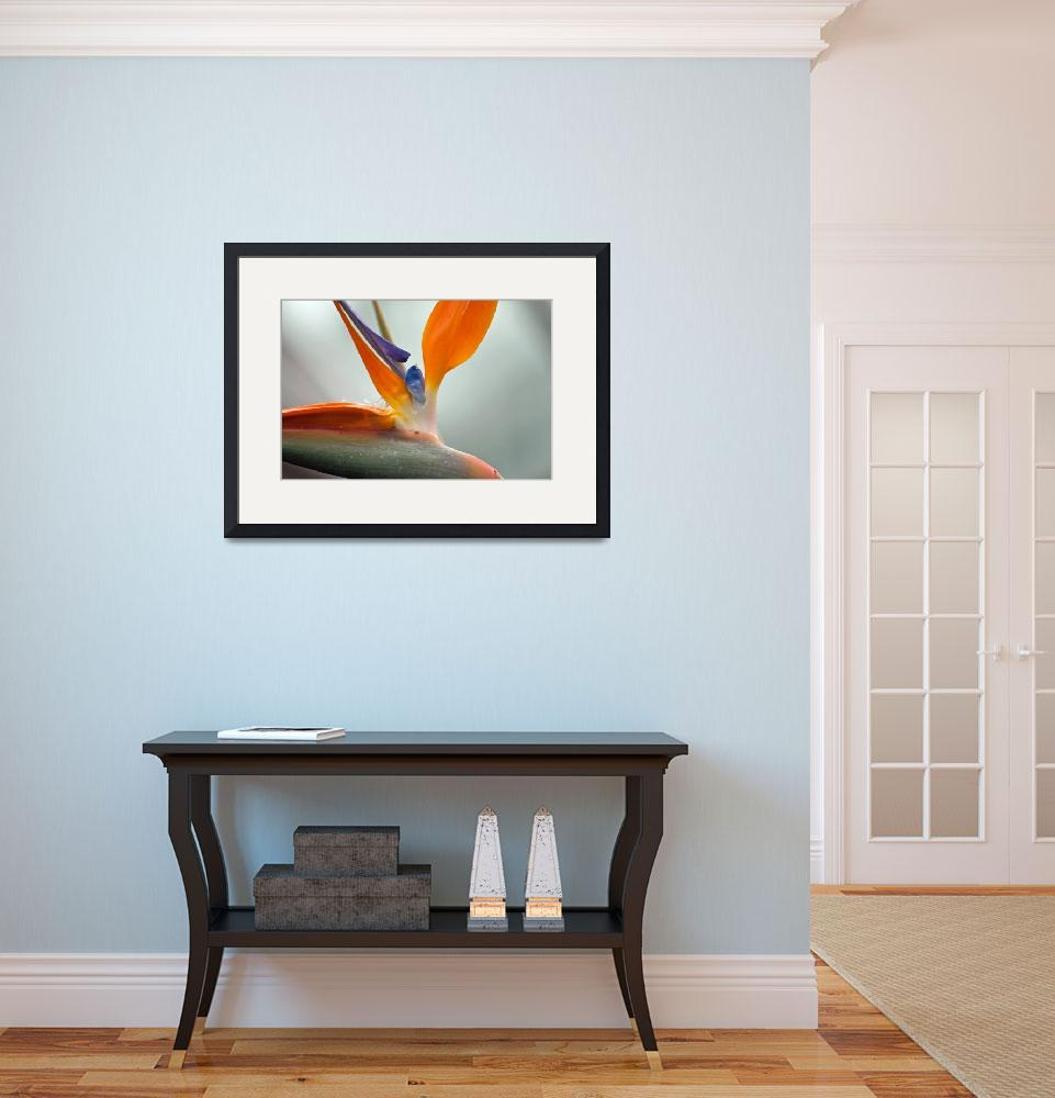 """Bird of Paradise&quot  by LJS"